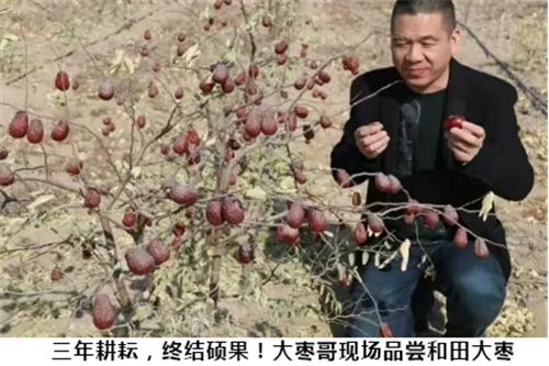 """河南""""大枣哥""""治沙三万亩  助力新疆当地群众致富"""